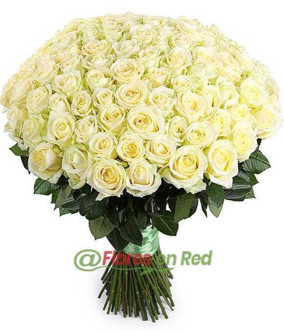 101 Rosas Blancas