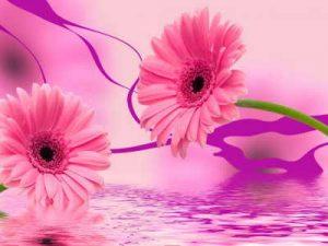 flores, enviar ramo de flores, centros de flores, flores nacimiento rosas, enviar flores rosas, envio de flores rosas,enviar ramo flores rosas