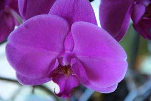 flores, enviar ramo de flores, centros de flores, flores nacimiento vitoria, enviar flores, flores nacimiento, envio de flores, enviar ramo de flores, ramos de flores para nacimientos