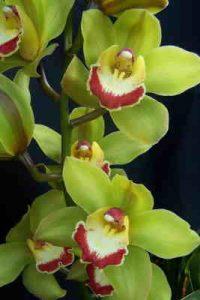 orquideas, floristería Vitoria, Floristeria online, floristeria cerca de mi, flores a domicilio vitoria