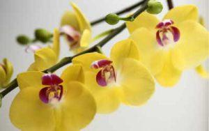 enviar ramo de flores, centros de flores, flores nacimientos, enviar flores, envio de flores, enviar ramo flores, ramos de flores para nacimientos, ramos de flores a domicilio, ramos de flores online