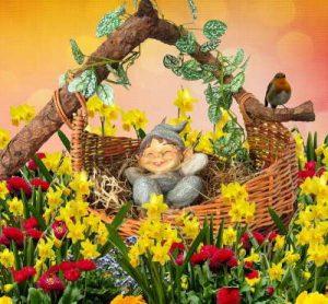 Rosas, Ramo de rosas, enviar rosas, cesta de rosas, regalar rosas a domicilio, cesta de flores silvestres