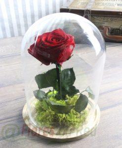 Rosa Eterna Bella y Bestia Vitoria, Flores, Rosas, Enviar rosas San Valentín, Rosas San Valentín, Enviar Rosas San Valentín