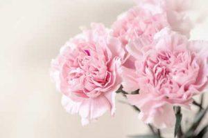 Rosas, Flores, ramo de rosas, enviar rosas, 12 rosas rojas, rosas para San Valentin Vitoria, enviar flores Vitoria