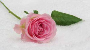 Flores para cumpleaños, Ramos de Flores para cumpleaños, Flores de cumpleaños, Ramos de Flores de Cumpleaños, Rosas para cumpleaños, Ramos de Flores para felicitar