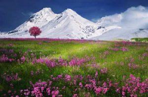 Flores, Floristería Vitoria, Ramos para funerales, Flores para Tanatorio de Vitoria, Flores Tanatorio Gamarra, Flores Tanatorio Lauzurica, Flores Tanatorio El Salvador Virgen Blanca