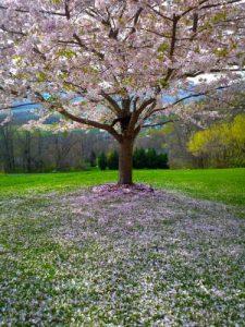 enviar flores a Tanatorio Gamarra, enviar flores Tanatorio Lauzurica, enviar Flores Tanatorio Virgen Blanca, Floristeria Funeraria