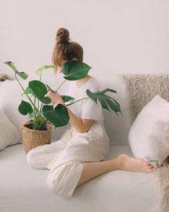 enviar plantas, decoracion otoñal, plantas a domicilio, regalar plantas, enviar plantas a domicilio, regalar plantas a domicilio, envio de plantas, plantas para regalar, plantas regalo