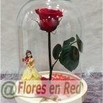 Rosa Eterna Bella y la Bestia Baile