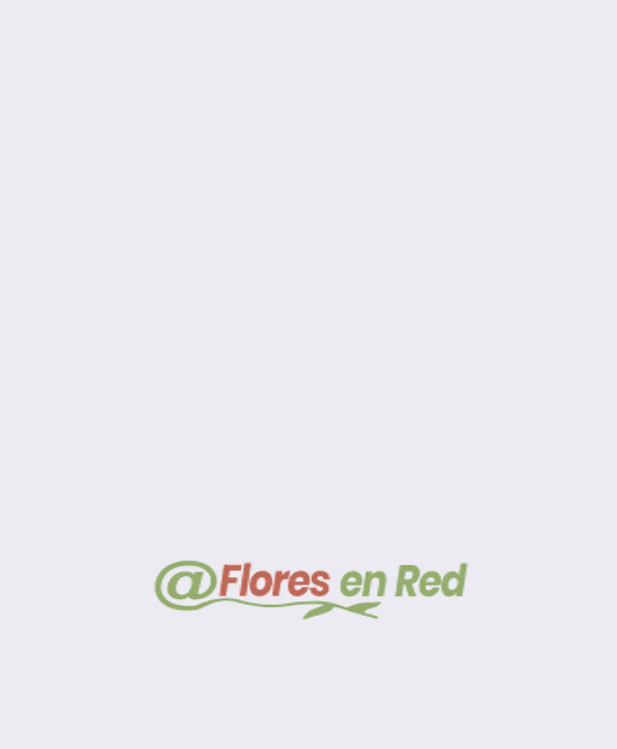 Anthurium en Base de Laton