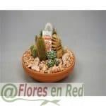 Composicion de Cactus FR444