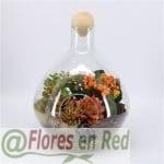 Plantas variadas en cristal FR446
