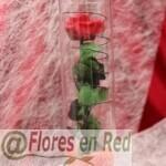 Rosa preservada en tubo